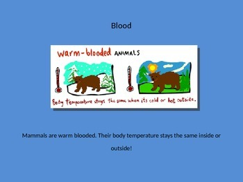 All about Mammals! Animal Classification