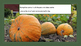 All about Pumpkins PowerPoint