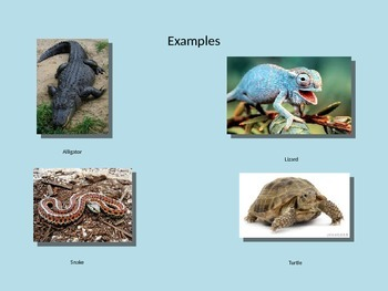 All about Reptiles! Animal Classification