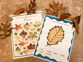 All about fall fun activity 1