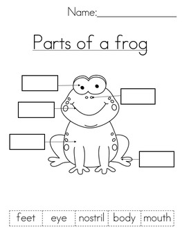 All about frogs! (Spanish version available also in my store)
