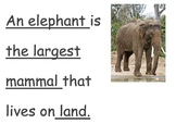 All about mammals; content vocabulary center