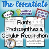 All-in-One Bulletin Board: Plants, Photosynthesis & Cellul