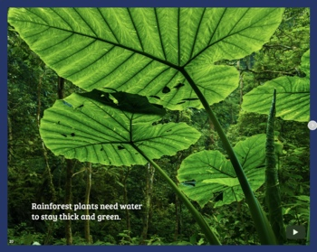 All in a Rainforest Day EPUB Book with Resources – Distance Learning