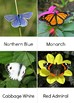 All things Butterfly Unit Study