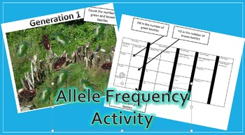Allele Frequency Practice Activity