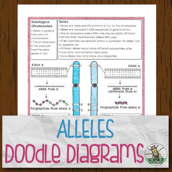 Alleles Doodle Diagrams