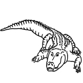 Alligator Addition
