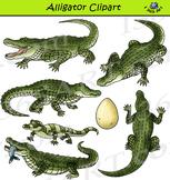 Alligator Clipart - Realistic
