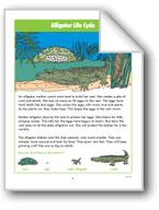 Alligator Life Cycle