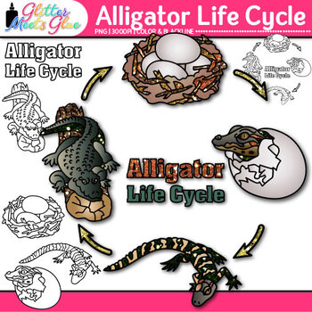 Alligator Life Cycle Clip Art {Teach Animal Groups, Habitats, and Adaption}