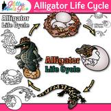 Alligator Life Cycle Clip Art {Teach Animal Groups, Habitats, and Adaption}