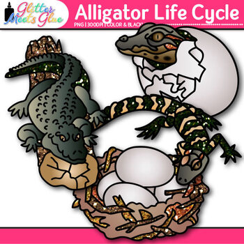 Alligator Life Cycle Clip Art | Teach Animal Groups, Habitats, and Adaption