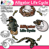 Alligator Life Cycle Clip Art: Animal Group Graphics {Glitter Meets Glue}