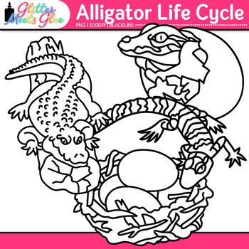 Alligator Life Cycle Clip Art {Teach Animal Groups, Habitats, and Adaption} B&W