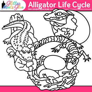 Alligator Life Cycle Clip Art: Animal Group Graphics B&W {Glitter Meets Glue}
