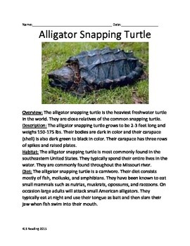 Alligator Snapping Turtle - Informational Article facts questions vocabulary