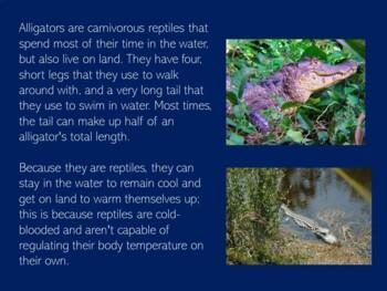 Alligators Activity   Reptiles PowerPoint   Reptiles Activity   Reptiles Science