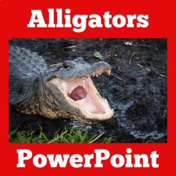 Alligators Activity   Reptiles PowerPoint   Reptiles Activ