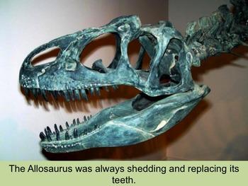 Allosaurus PowerPoint