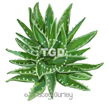 Aloe Vera Plant Art - Original Art Download Printable Tracey Gurley Designs