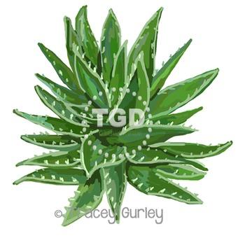 Aloe Vera Plant Art - Original Art Download Printable Trac