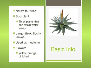 Aloe Vera Powerpoint - basic information