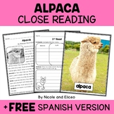 Alpaca Close Reading Passage Activities