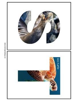 Alphabet B 1/2 Sheets