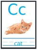 Alphabet Cards (Editable)