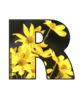 Alphabet Clipart Bulletin Board Set Daisies