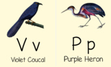 ABC Bird Flashcard BUNDLE, Cursive AND Print/Manuscript,  Vintage Bird Images