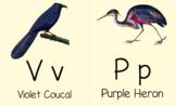 ABC Bird Flashcard BUNDLE, Cursive AND Print/Manuscript,