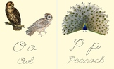 ABC Bird Flashcards, Cursive, Vintage Bird Images, Nature