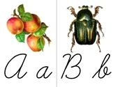 Alphabet Flashcards, Cursive,  Vintage Images, Nature Tabl