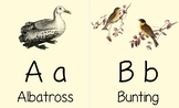 ABC Bird Flashcards, Manuscript/Print Font, Vintage Bird Images, Nature