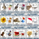 Alphabet Phonics and Writing Center Bundle