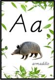 Alphabet Poster Animal Theme - D'nealian (real pictures)