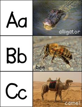 Alphabet Puzzles with Photographs