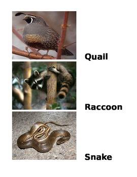 Alphabet animals of America
