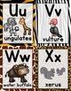 Alphabet: Safari