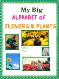 Alphabet of Flowers & Plants: Letters A - D