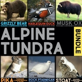 Alpine Tundra Animals BUNDLE: Informational Article, QR Codes & Fact Sort