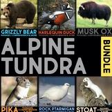 Alpine Tundra Animals BUNDLE: Informational Article & Comprehension Resources
