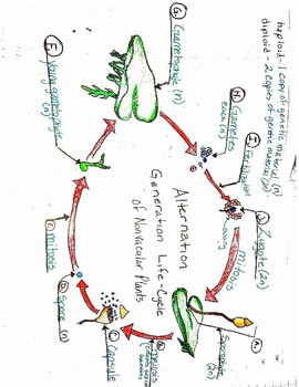 Alternation Generation Life-Cycle of a Nonvascular Plant