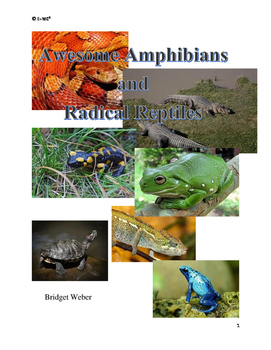 Amazing Amphibians and Radical Reptiles