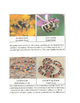 Amazing Animal Adaptations