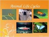Amazing Animal Life Cycles