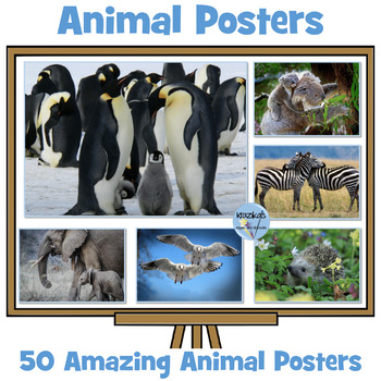 Amazing Animal Posters - Set 0f 50