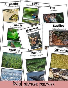 Amazing Animals! A Nonfiction Pack